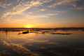 水鏡 -印旛沼-