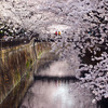 川面も桜色