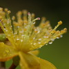 梅雨の草花は美しい ①