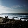 Dog Sea & Blue