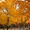 白川公園の紅葉