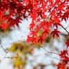 紅葉狩りin Takao