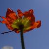 死せる花1