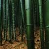 deep bamboo