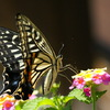 庭の昆虫1