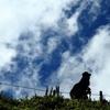初秋の伊吹山-登山客(女性)