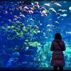 Aquarium 03 - 鳥羽水族館