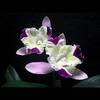 季節を彩る花々part.3 ①