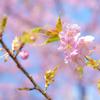 春のプロローグ