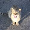 サンセットヒルズの奇跡猫