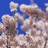 花満開 3