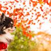 紅葉に感動。。。