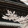 南禅寺の本堂と桜