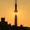 日蝕~黄の世界-