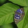 国蝶の輝き DSC_5023