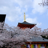 中山寺の桜1