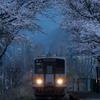 始発列車を迎える桜