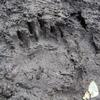 熊の足跡⑥