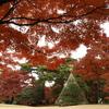 殿ヶ谷戸庭園3