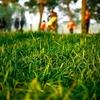 芝生のうえに