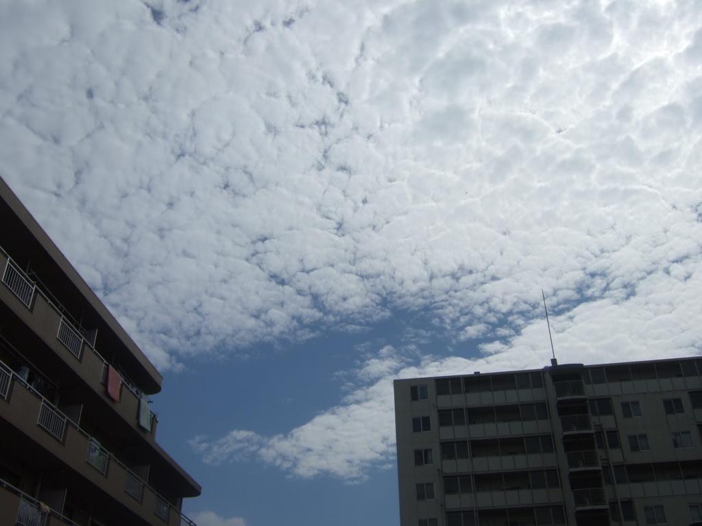 うろこ雲とマンション