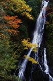 秋色大沢の滝