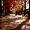 赤朽ち葉色の道