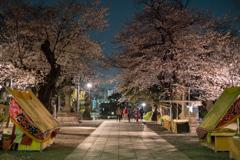 池上本門寺の夜桜