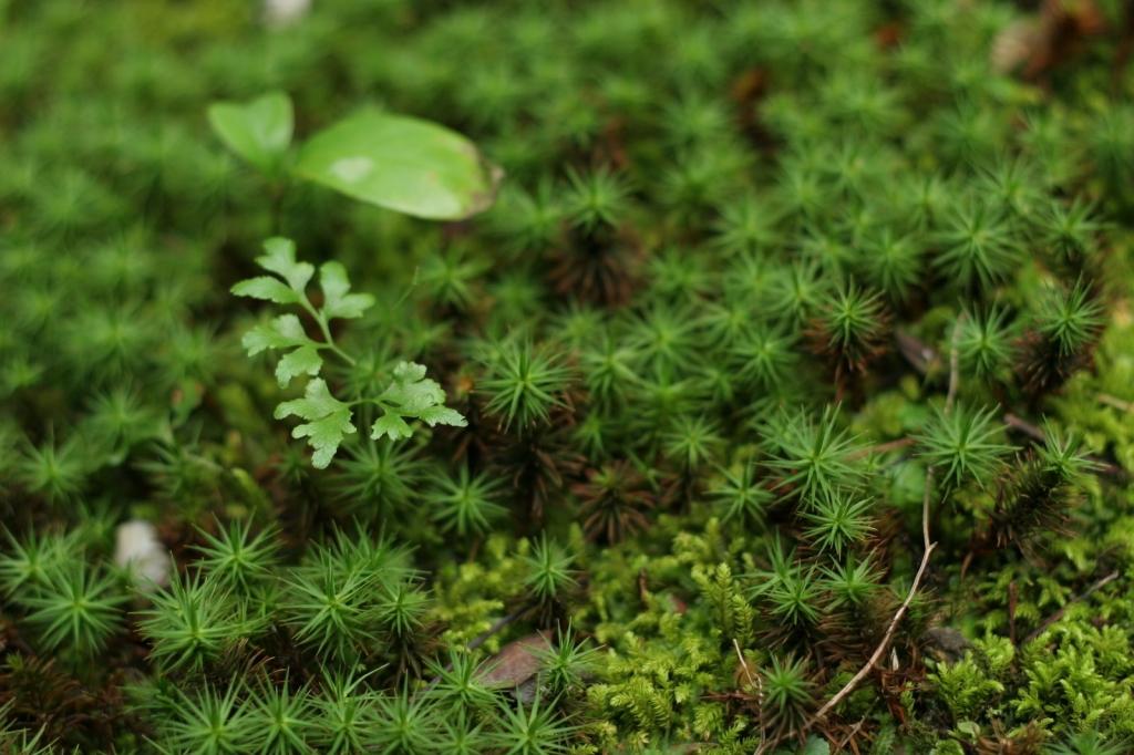 苔ジャングル
