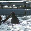 イルカと遊ぼう♪
