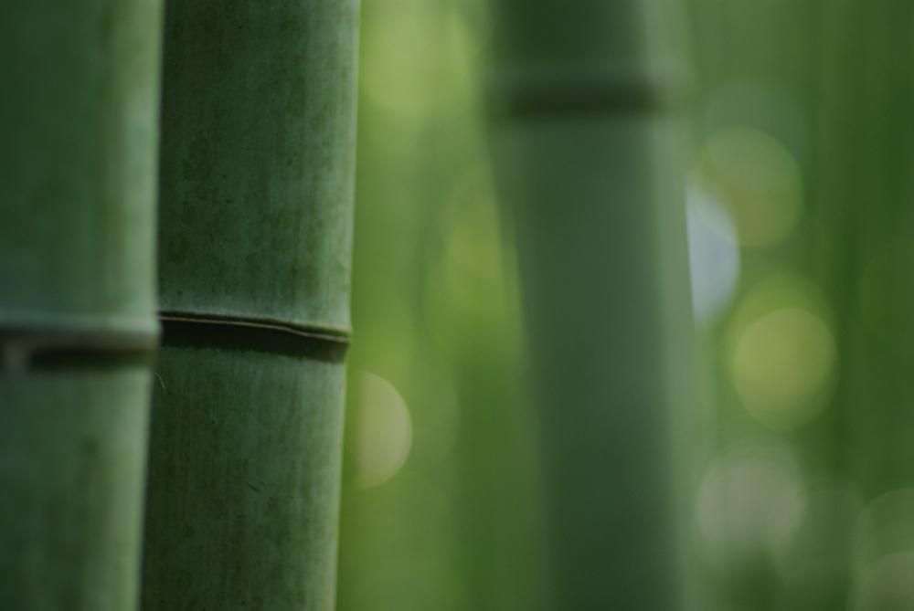 嵯峨野の竹