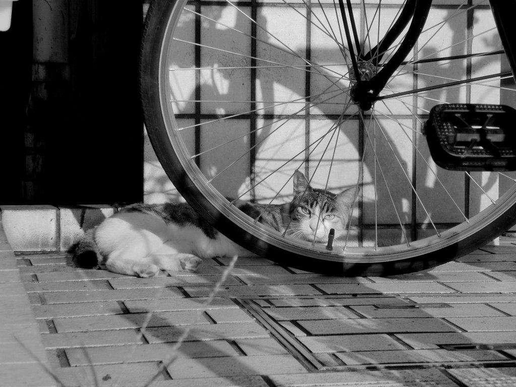 微警戒ネコ