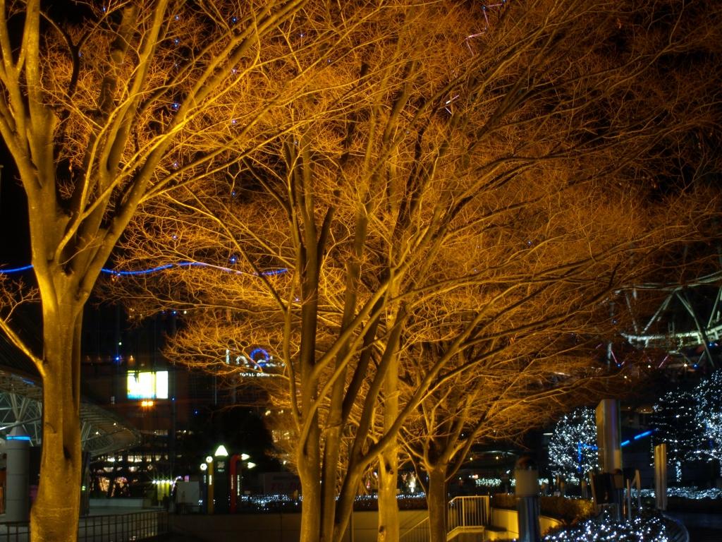 照明された木