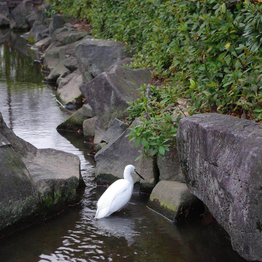 公園の白い鳥