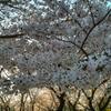 住吉公園4
