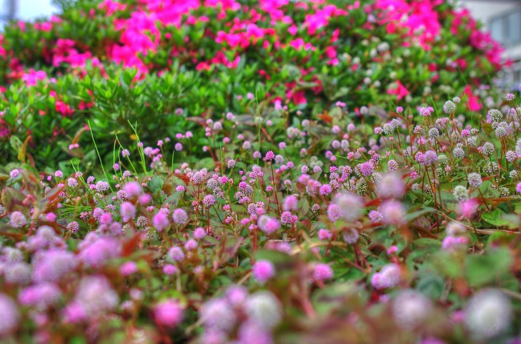 マンションの庭
