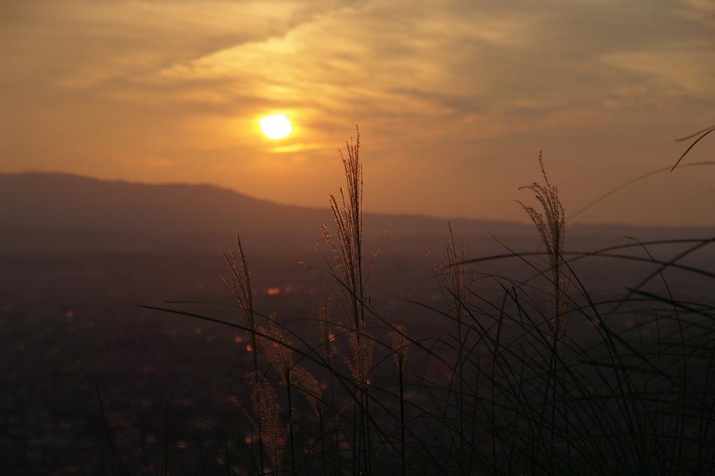若草山にて