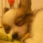 RICOH Caplio GX100で撮影した動物(おやすみワンコ)の写真(画像)