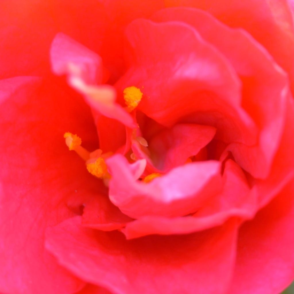 あたたかな光りと、やわらかな花びら