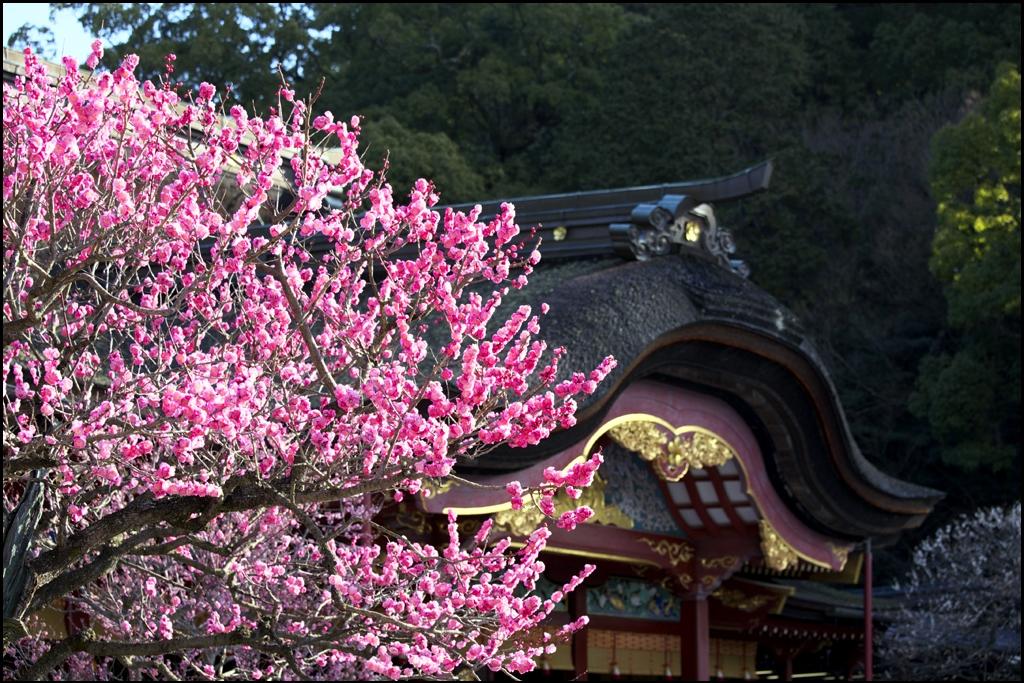 梅の花 IMG_2001m
