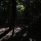 SIGMA SIGMA DP1で撮影した風景(HARAJUKUの木)の写真(画像)