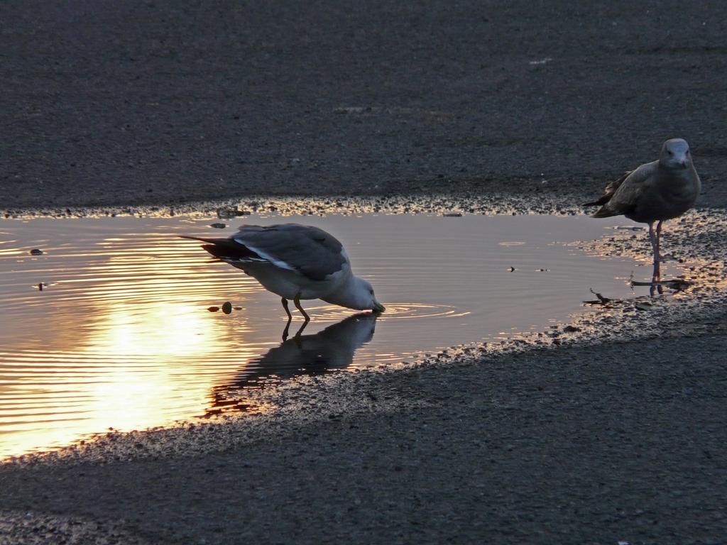 夕日と海鳥