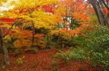 山梔子色の秋