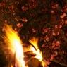 PENTAX PENTAX K10Dで撮影した植物(夜桜と篝火)の写真(画像)