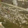 PENTAX PENTAX K10Dで撮影した風景(夙川の桜、記念写真)の写真(画像)