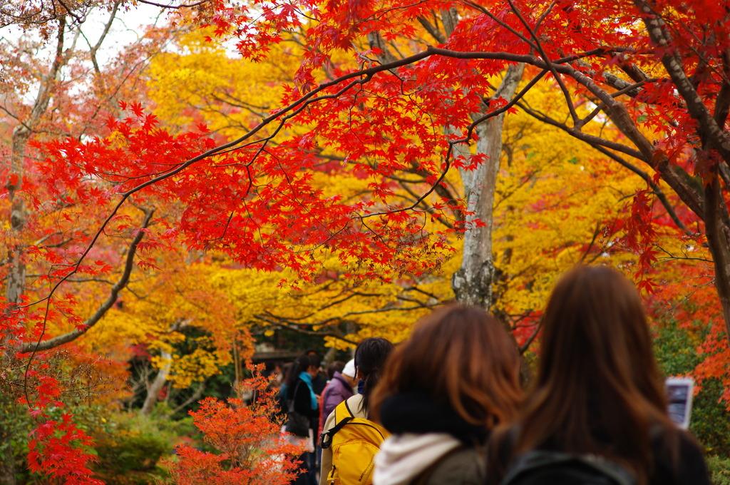 にぎわいの秋