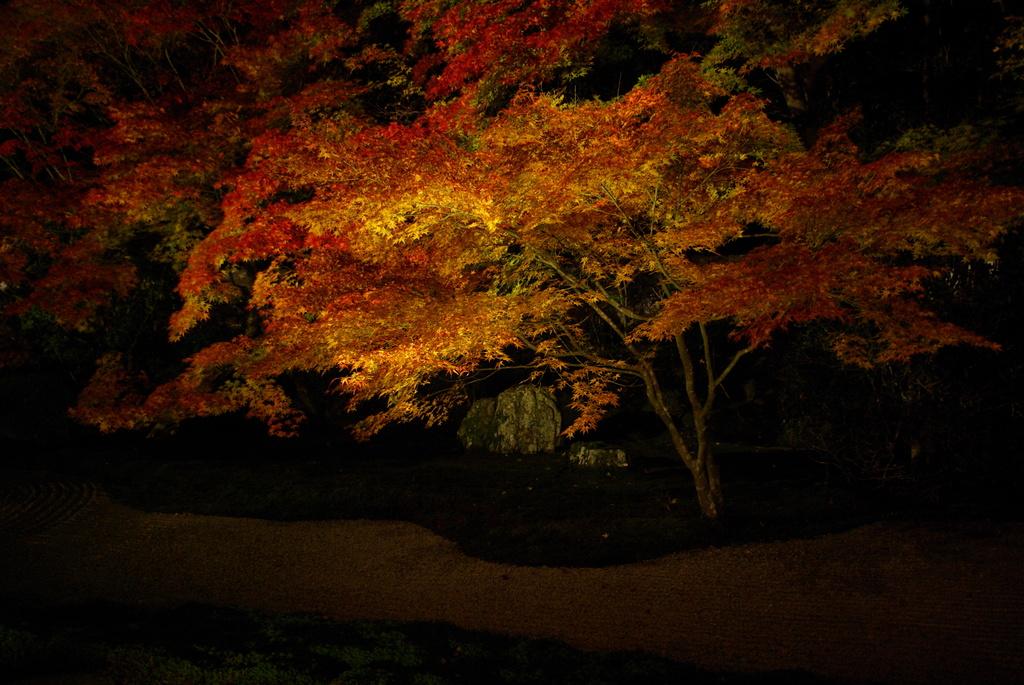 流水にかかる紅葉