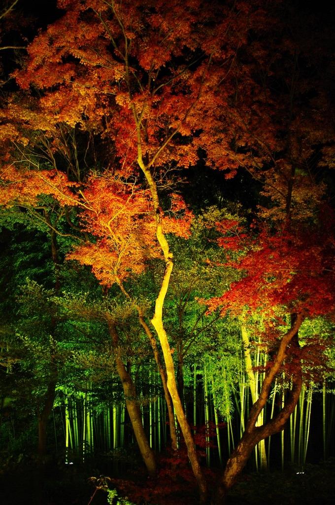 見上げる秋
