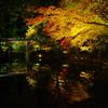 臥龍池の紅葉