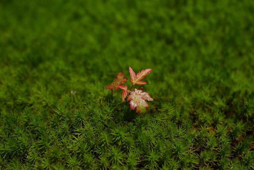 緑に芽吹く